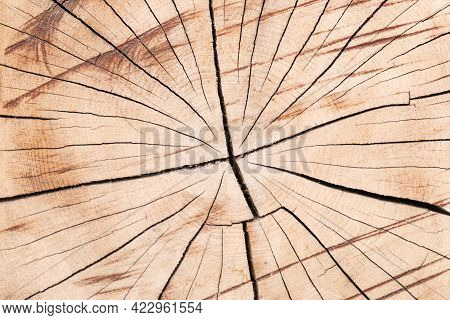 Tree Trunk Texture. Cross-cut Of A Tree Trunk With Cracks Due To Improper Drying Of The Wood. Close-