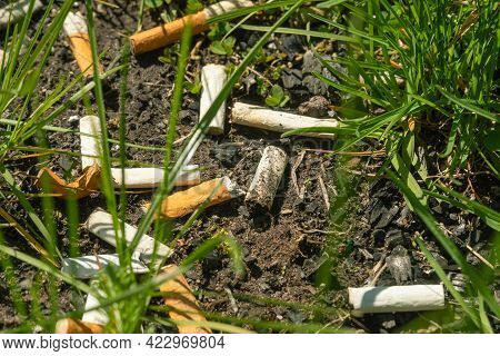 Close-up Of A Lot Of Discarded Cigarette Butts In The Grass. Cigarette Butts On The Ground. Environm
