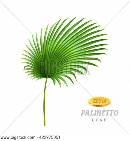 Tropical Leaves And Foliage, Isolated Exotic Plant. Palmetto With Wide Leafage And Fleshy Stem. Hawa