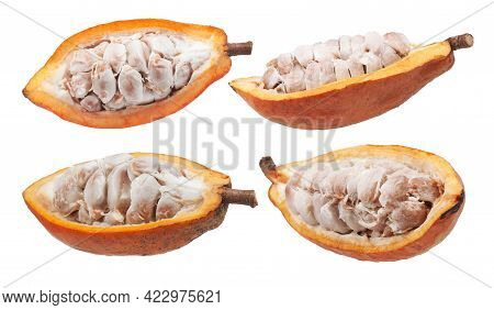Cacao Orcocoa Fruits Isolated On White Background
