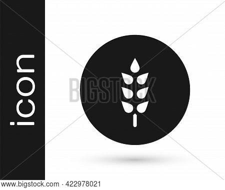 Black Cereals Set With Rice, Wheat, Corn, Oats, Rye, Barley Icon Isolated On White Background. Ears