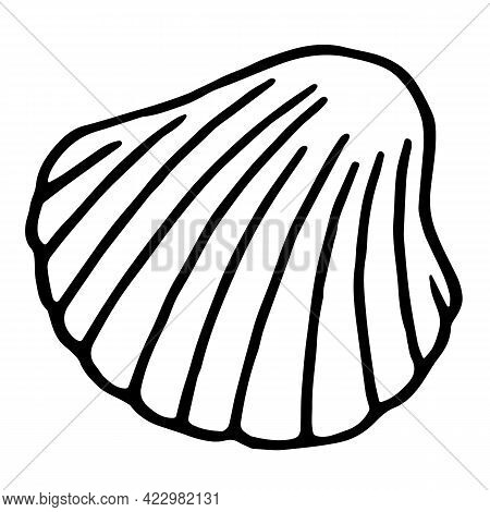 Hand Drawn Sea Scallop In Shell. Vector Seashell In Doodle Style Isolated On White Background. Summe