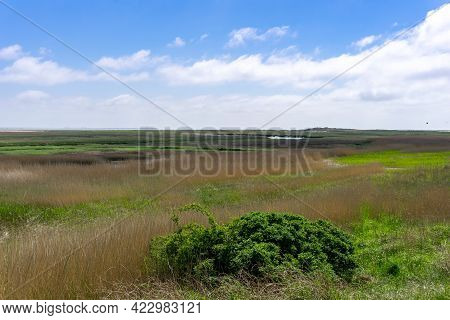 View Of Typical Wadden Sea Landscape With Marshgrass And Inlets And Sand Bars