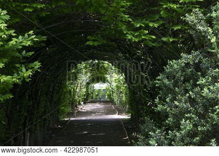 Green Tunnel Passage Made Of Overgrown Plants And Green Leaves. Arched Hedge Made From Pergola In A