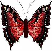 Ruby red  and black butterfly drawing  wings open. poster