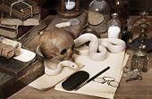 White Texas rat snake on a human skull poster