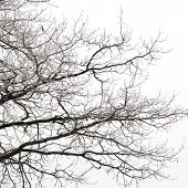 Bare branches covered by snow over white background poster