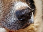 The nose of dog is the accomplished olfactory. He has a lot of receptors. poster