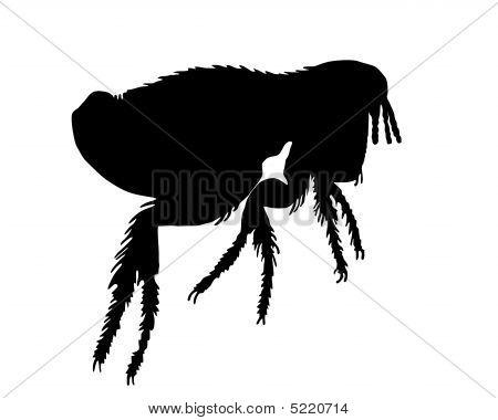 The black silhouette of a flea.