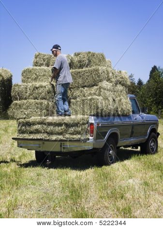 Man Loading Hay On Truck