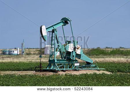 West Texas oil well pumper in cotten field. poster