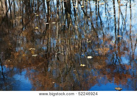 Lake which reflects the trees with fallen leaves poster