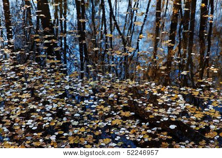 Surface Of The Lake Covered With A Leaf