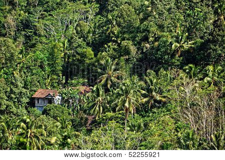 Green forest with old house