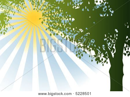 Vector Tree And Sunshine