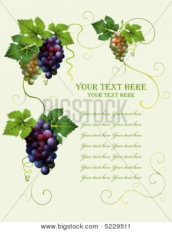 Vector Grape Frame From Diferent Cluster Of Grapes