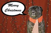 A black pug dressed in Christmas holiday colors surrounded by lights and a chat bubble. poster