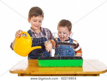 Two kids watering the seedling