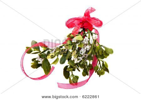 Fresh Green Mistletoe