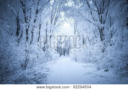 Path trough a frozen forest with frost and snow in winter