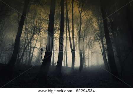 dark forest with rain and fog
