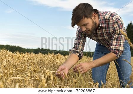 Young Farmer Inspecting Crop