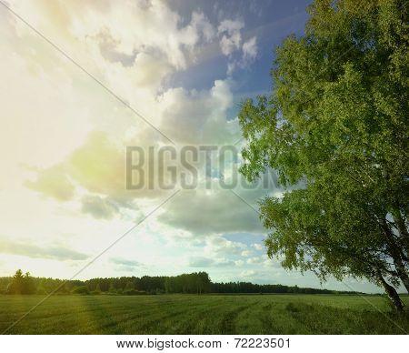 Summer Sky Tree Field