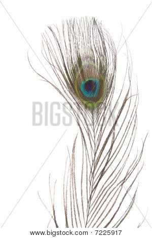 Beautiful peacock eye feather isolated on white background
