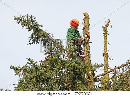 Lumberjack In The Tree Top