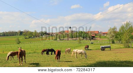 Idyllic Country Scenery With Grazing Horses And Little Village, Bavarian Landscape, Germany
