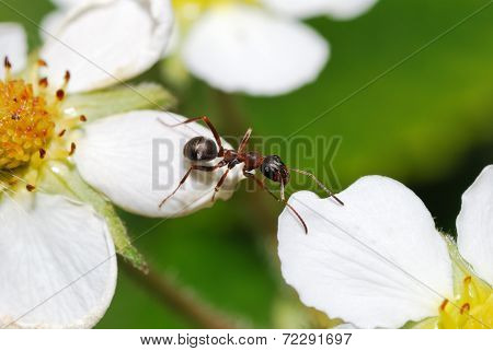 Ant Obstacle