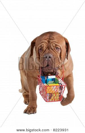 Responsible dogue de bordeaux going shopping with a cart poster
