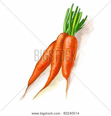 carrots vector illustration  hand drawn  painted watercolor
