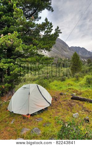 Double Lightweight Sports Tent Under A Large Siberian Pine