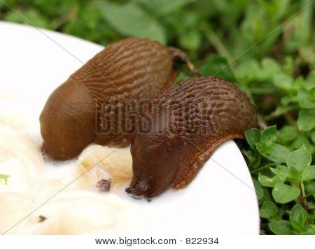 Drinking Snails