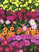 image of Colorful bunch of flowers background poster