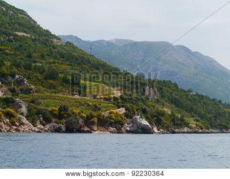 Small afgriculture on Peljesac in Croatia