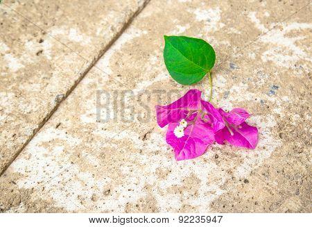 Bougainvillea On The Floor