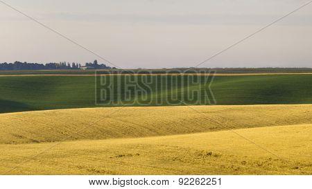 Morning in the farmland