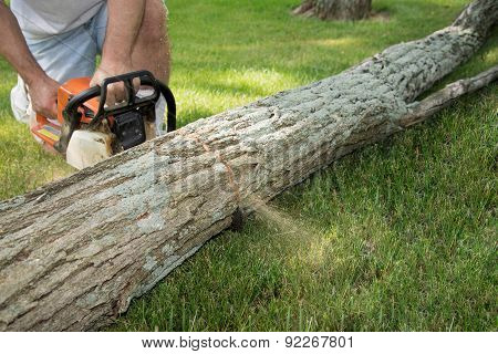 Man With Chain Saw Cuttting Fallen Tree Into Logs