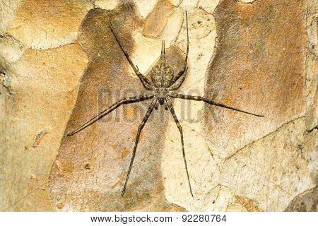 Tree bark and long legs spider.