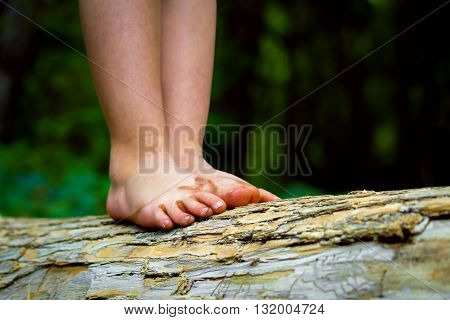 A child's very dirty feet with flip flop marks balance on a fallen log.