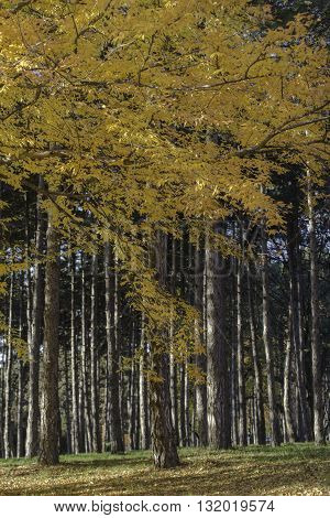 Forest trees nature wood backgrounds autumn season