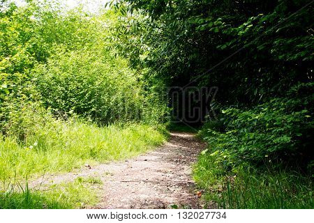 Path Going Through The Trees In An English Wood