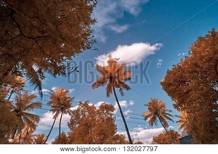 Infra red image of red foliage against a blue sky with clouds