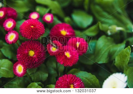 Bright red flowers on a green lawn background for website