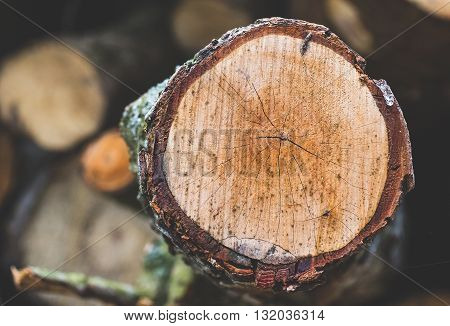 Wood wooden log cut off sliced lumber three with copy space and empty space
