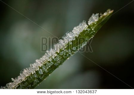Closeup Of Winter Hoarfrost And Waterdrops