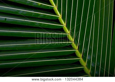 Bright Green Palm Frond Tropical Background for nature theme