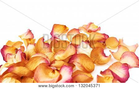 White surface covered with pink old dried rose petals as a romantic background composition